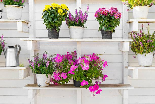 Online tuinplanten bestellen